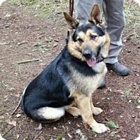 Adopt A Pet :: Bodil - Woodinville, WA