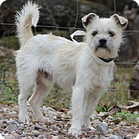 Adopt A Pet :: Travis - Spring, TX