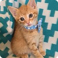 Adopt A Pet :: Britain - Duluth, GA