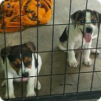 Adopt A Pet :: Blue eyed 7 - Brooksville, FL