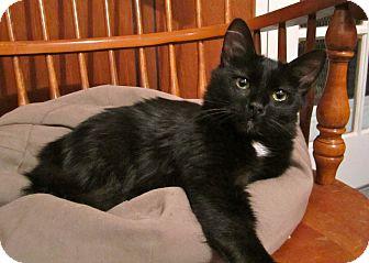 Domestic Longhair Cat for adoption in Lafayette, California - Luna