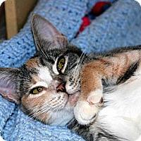 Adopt A Pet :: Maizee - New Port Richey, FL