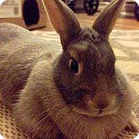 Adopt A Pet :: Evana - Portland, ME