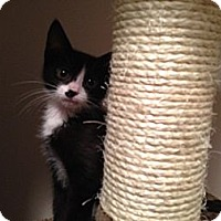 Adopt A Pet :: Addie - East Hanover, NJ