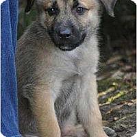 Adopt A Pet :: Choco - Pike Road, AL