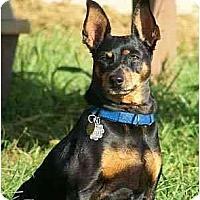 Adopt A Pet :: Sadie - Nashville, TN