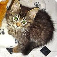 Adopt A Pet :: Sambo - Escondido, CA