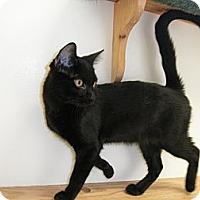Adopt A Pet :: Sluggo - Milwaukee, WI