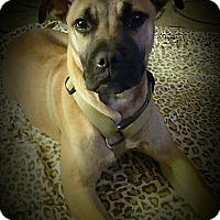 Adopt A Pet :: Fargo ~ Adoption Pending - Youngstown, OH