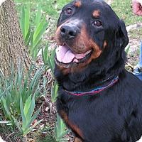 Adopt A Pet :: Grant - Tracy, CA