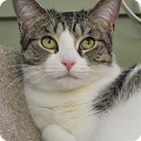 Adopt A Pet :: Candy - Milton, MA