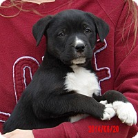 Adopt A Pet :: Dallas (8 lb) Video! - West Sand Lake, NY