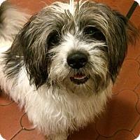 Adopt A Pet :: Shaggy Magoo - Staten Island, NY