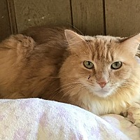 Adopt A Pet :: Fluffy - Corinne, UT