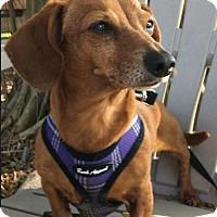 Adopt A Pet :: Gail - Weston, FL