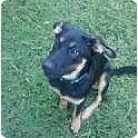 Adopt A Pet :: Clover - Murfreesboro, TN