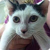 Adopt A Pet :: Gabriella - Riverhead, NY