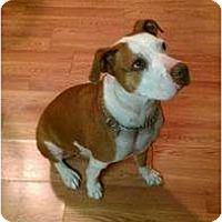 Adopt A Pet :: Blaze - Covington, KY