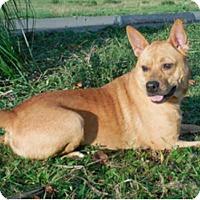 Adopt A Pet :: Robin sweety - Sacramento, CA