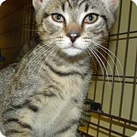 Adopt A Pet :: PEZ - Acme, PA