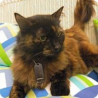 Adopt A Pet :: Carter Squeak - The Colony, TX