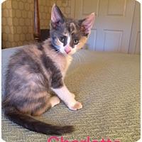 Adopt A Pet :: Charlotte aka Ella - Hamilton, NJ