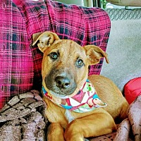 Adopt A Pet :: Chloe - Long Beach, CA