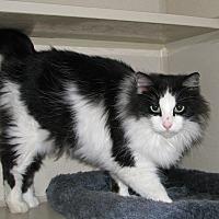 Adopt A Pet :: Zory - Ruidoso, NM