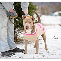 Adopt A Pet :: Arianna - RESCUED! - Zanesville, OH