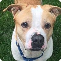 Adopt A Pet :: Winslow - Montclair, NJ