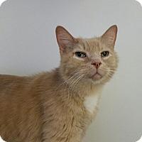 Adopt A Pet :: Dusty - Elyria, OH