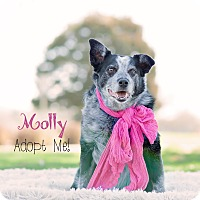 Adopt A Pet :: Molly - Boise, ID