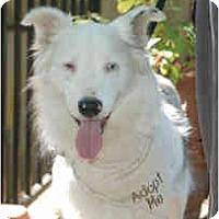 Adopt A Pet :: Kimo - Mesa, AZ