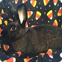 Adopt A Pet :: Harold - Columbus, OH