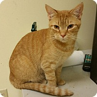 Adopt A Pet :: Sawyer - Maryville, TN