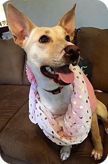 Labrador Retriever/German Shepherd Dog Mix Dog for adoption in Chicago, Illinois - Eliza