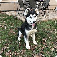 Adopt A Pet :: Holly Berry Adoption Pending - Alpharetta, GA