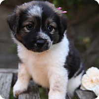 Adopt A Pet :: Snow White - La Habra Heights, CA