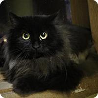 Adopt A Pet :: Ember - West Des Moines, IA