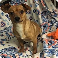 Adopt A Pet :: Casey - Knoxville, TN
