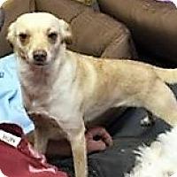Adopt A Pet :: Nicole - Tavares, FL