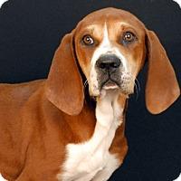 Adopt A Pet :: Mystique - Newland, NC
