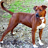 Adopt A Pet :: Ron Howard - Dalton, GA