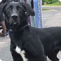 Adopt A Pet :: Malachi - Minneapolis, MN