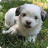 Adopt A Pet :: Gale - La Habra Heights, CA