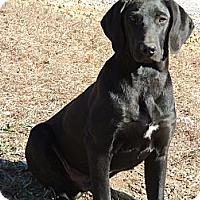 Adopt A Pet :: Jerry - Kittery, ME