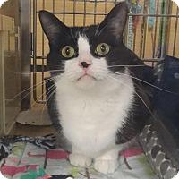 Adopt A Pet :: ZEUS - Diamond Bar, CA