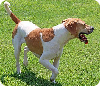 Hound (Unknown Type) Mix Dog for adoption in Savannah, Tennessee - Viktor