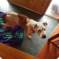 Adopt A Pet :: ROXANNE - Eastsound, WA