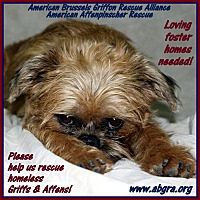 Adopt A Pet :: FOSTER HOMES NEEDED! - Los Angeles, CA